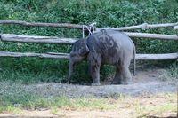 Lampang, Elefantenzentrum, Thailand