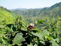 Myanmar Kalaw Wanderung_ES_FOC