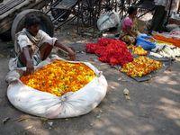 IN_Kalkutta_Blumenmarkt_WG_FOC