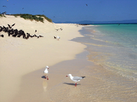 Strand bei Cairns