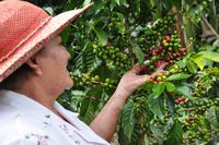 CO_Kaffeeregion_Kaffeefarm (4)_AG Colombian Journeys_FOC