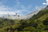 CO_Region Armenia_Valle Cocora (2)_OR_FOC