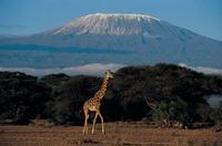 Kilimandscharo_Djoser Reisen