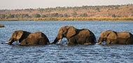 Rundreise Namibia, Botswana & Sambia mit Kindern, 22 Tage
